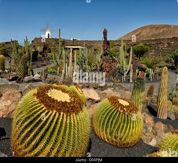 spain lanzarote guatiza jardin de cactus cactus garden windmill