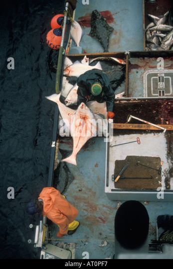 Commercial halibut fishing alaska stock photos for Commercial fishing gear