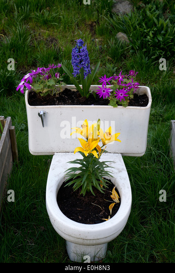 spring-flowers-growing-in-a-toilet-bowl-