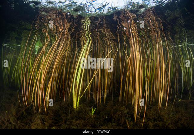 Freshwater Biology Stock Photos & Freshwater Biology Stock ...