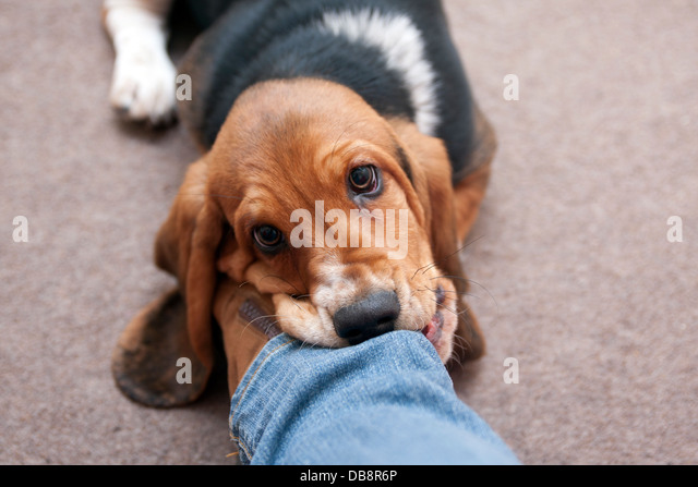 how to stop dog chewing leg
