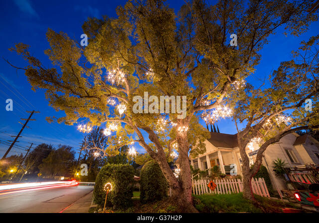 The Chandelier Tree Stock Photos & The Chandelier Tree Stock ...