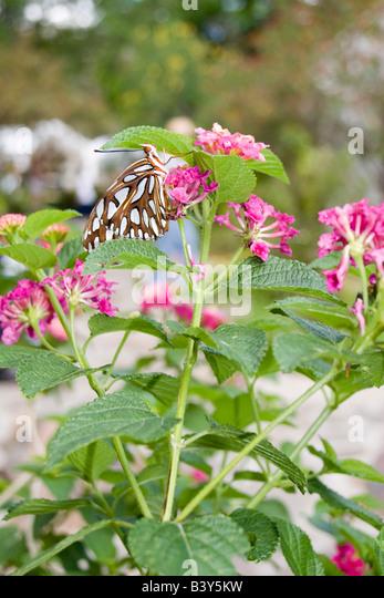 Leu gardens orlando florida stock photos leu gardens for Butterfly garden orlando