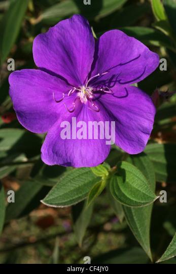 flower flora costa rica stock photos  flower flora costa rica, Natural flower