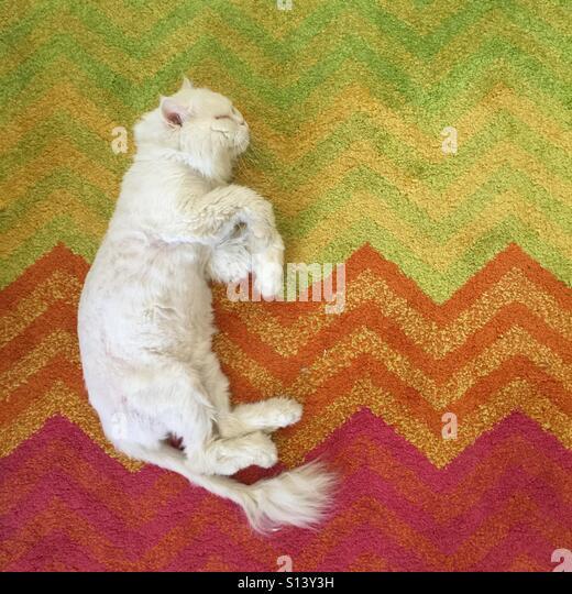 Carpet Animal Stock Photos & Carpet Animal Stock Images