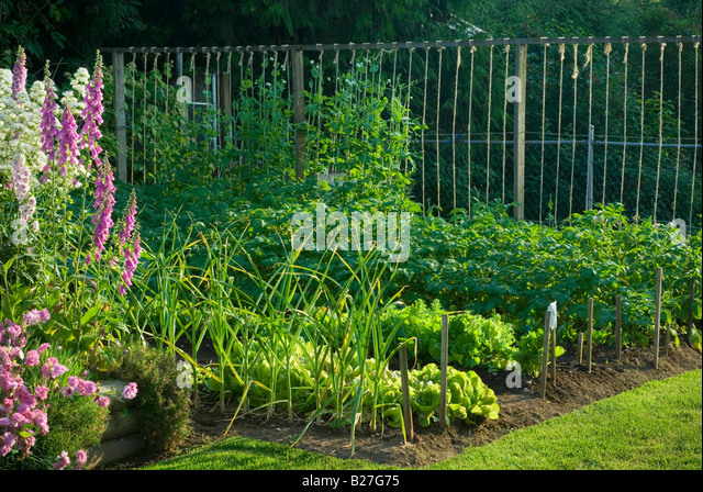 Vegetable patch backyard stock photos vegetable patch for Vegetable patch in small garden