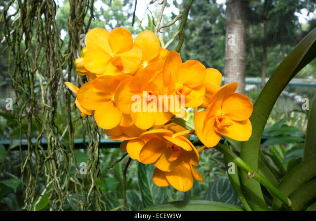 orange tropical flowers stock photos  orange tropical flowers, Natural flower