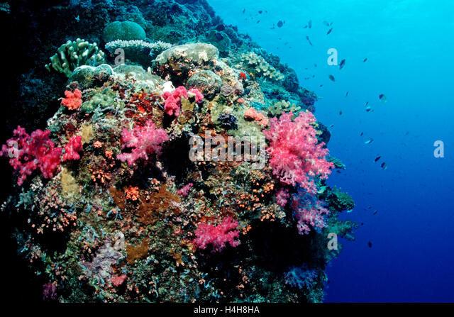 palau coral reef essay The republic of palau is located in the western pacific ocean it is the  westernmost archipelago in the caroline island chain the main island group has  one.