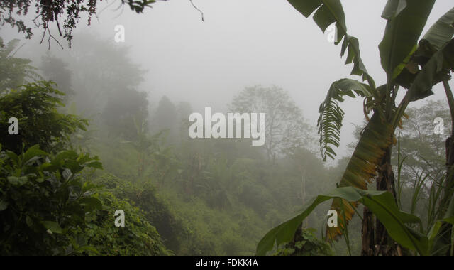 Jungle With Mist After Rain Shower   Stock Image