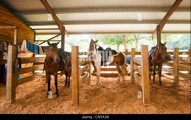 Horse Stables Stock Photos Amp Horse Stables Stock Images Alamy