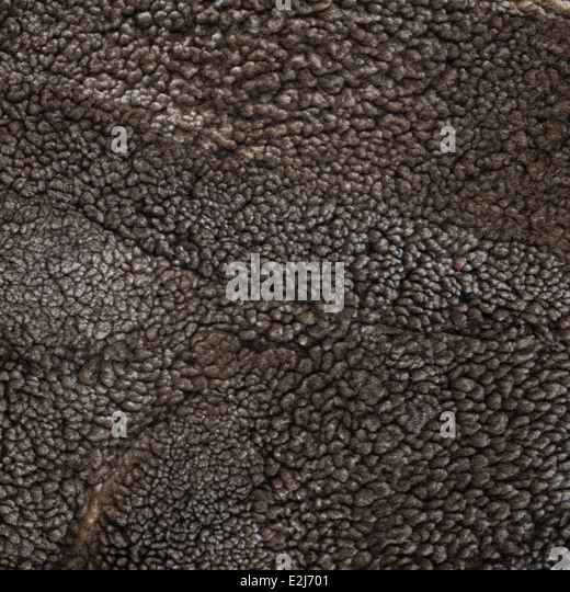 Sheep Skin Rug Stock Photos & Sheep Skin Rug Stock Images