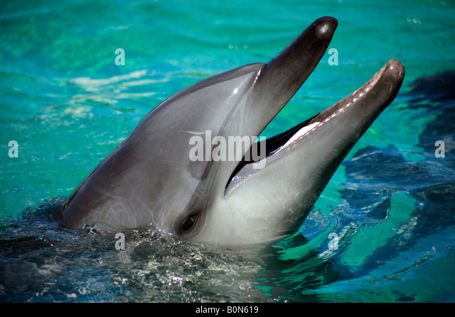 Dolphin Like Stock Photos & Dolphin Like Stock Images - Alamy