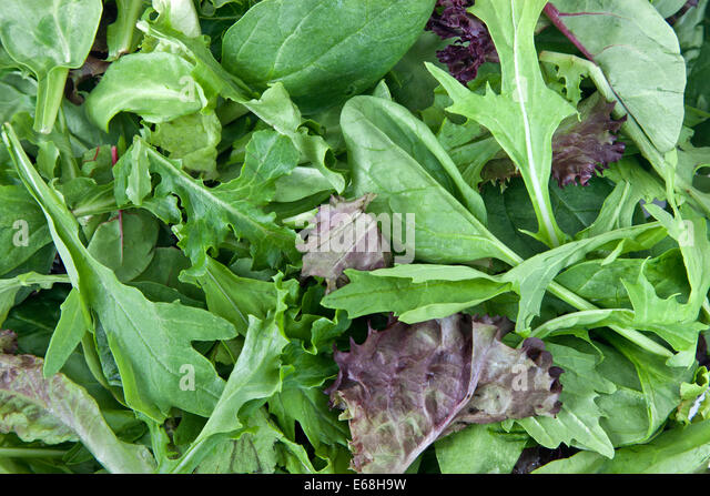 baby red leaf lettuce stock photos baby red leaf lettuce stock images alamy. Black Bedroom Furniture Sets. Home Design Ideas