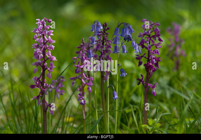 wild orchids stock photos  wild orchids stock images  alamy, Beautiful flower