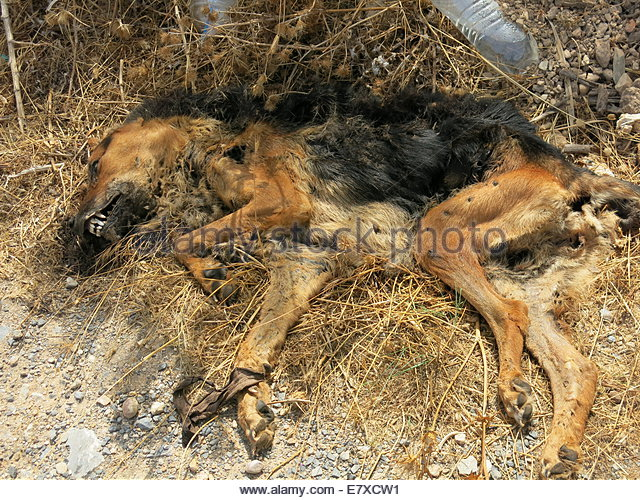 Decomposed Dog Body After  Months