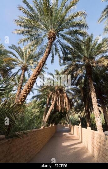 oasis date site