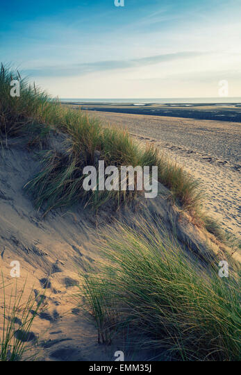 Landscaping Over Sand : Grassy sand dunes stock photos