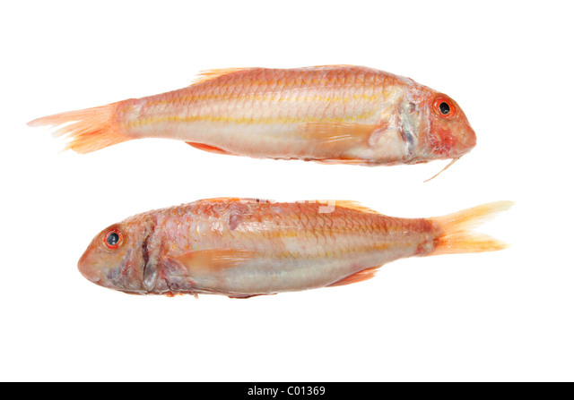 Red mullet stock photos red mullet stock images alamy for Red mullet fish