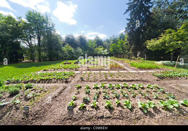 Vegies Stock Photos Vegies Stock Images Alamy