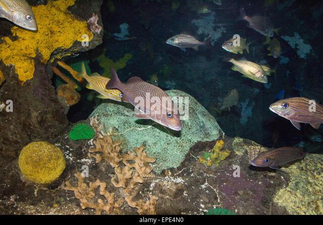 Ripleys Aquarium Stock Photos & Ripleys Aquarium Stock Images - Alamy