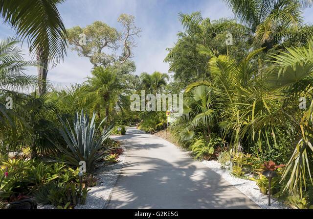 Caribbean Garden, Naples Botanical Garden, Naples, Collier County, Florida,  United States