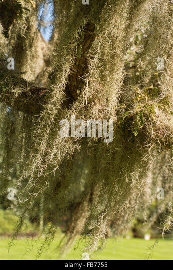 Hanging Moss Stock Photos & Hanging Moss Stock Images - Alamy