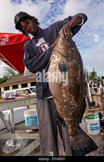 Fish tropical grouper stock photos fish tropical grouper for Bahamas fish market