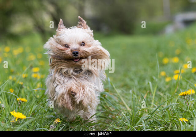 animal running funny stock photos  u0026 animal running funny stock images