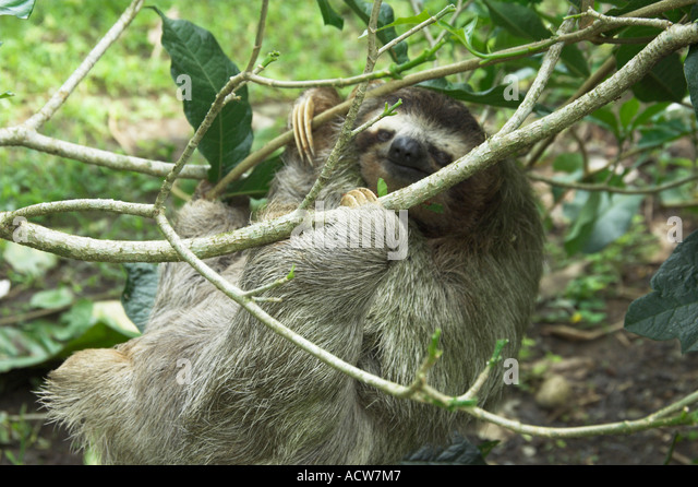 Baby Sloth Saved by Cincinnati Couple in Costa Rica ...