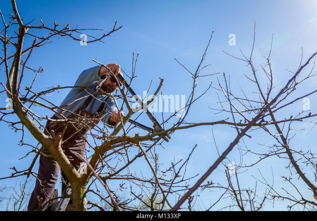 Ladders And Tree Stock Photos Amp Ladders And Tree Stock
