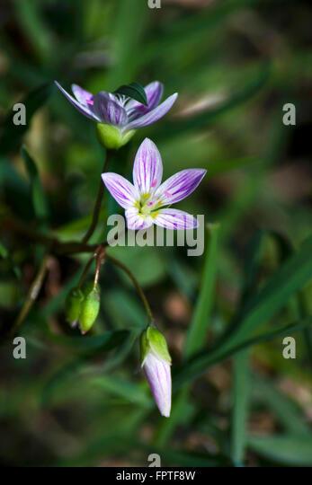 Close Up Tiny Purple Flower Stock Photos Close Up Tiny