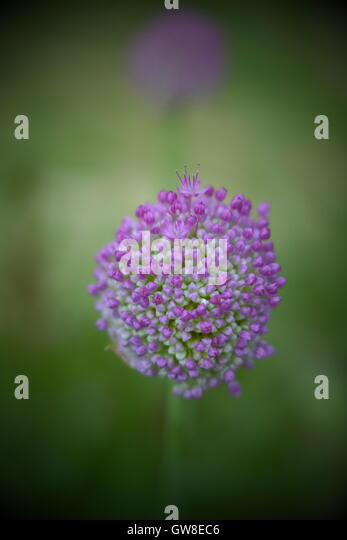 tiny purple flowers stock photos  tiny purple flowers stock, Beautiful flower