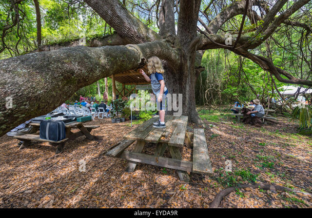 Picnic In Botanical Gardens In Stock Photos Picnic In Botanical Gardens In Stock Images Alamy