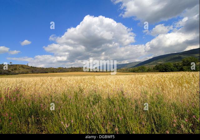 Osseja stock photos osseja stock images alamy - Osseja francia ...
