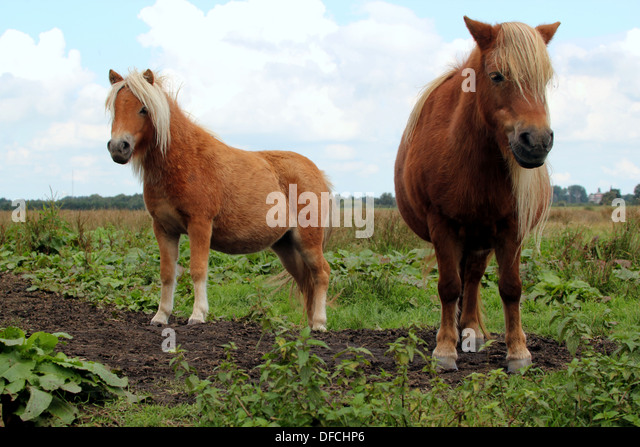 long manes stock photos - photo #27