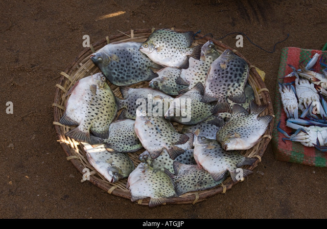 Fish market in negombo sri stock photos fish market in for Reef fish for sale