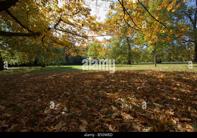 Ravishing Autumn Kensington Gardens Trees Stock Photos  Autumn Kensington  With Fair Autumn Leaves Kensington Gardens The Royal Park London England Uk Gb   Stock Image With Divine Balthazar Restaurant Covent Garden Also Garden Of Life Vitamin Code In Addition Animal Statues For Garden And Crossways Garden Centre As Well As Adelaide Botanic Garden Additionally Garden Bin Storage From Alamycom With   Fair Autumn Kensington Gardens Trees Stock Photos  Autumn Kensington  With Divine Autumn Leaves Kensington Gardens The Royal Park London England Uk Gb   Stock Image And Ravishing Balthazar Restaurant Covent Garden Also Garden Of Life Vitamin Code In Addition Animal Statues For Garden From Alamycom