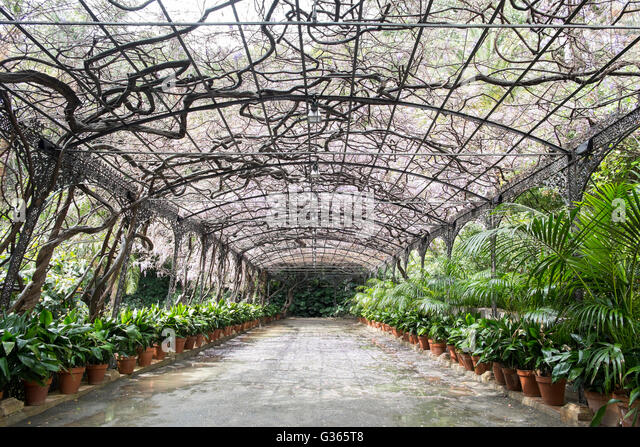 Aspidistra stock photos aspidistra stock images alamy for Bodas jardin botanico malaga