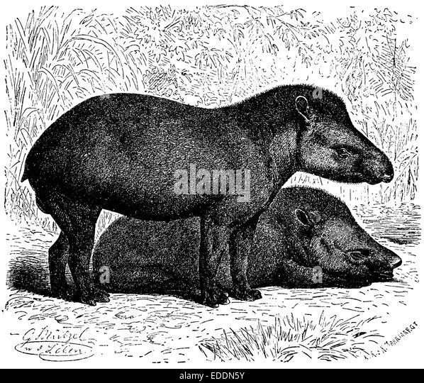 John Gabriel Stedman Natural History