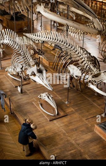 Animal Bones Collection Stock Photos & Animal Bones ...