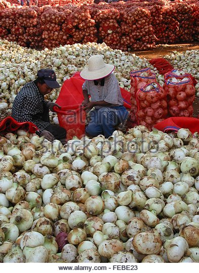 12 Onions Stock Photos Amp 12 Onions Stock Images Alamy