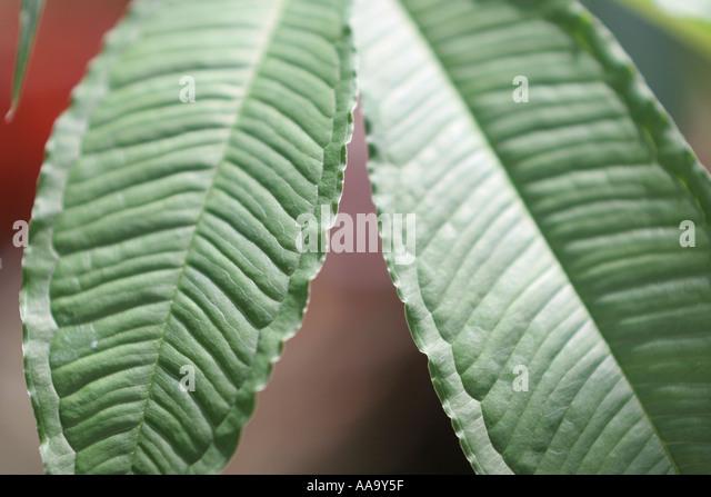florida tropical plant flora growing life leaf green