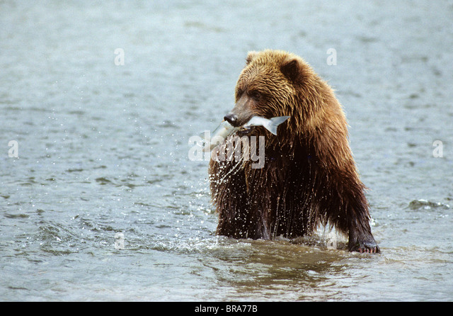 Mcneil River Stock Photos & Mcneil River Stock Images - Alamy