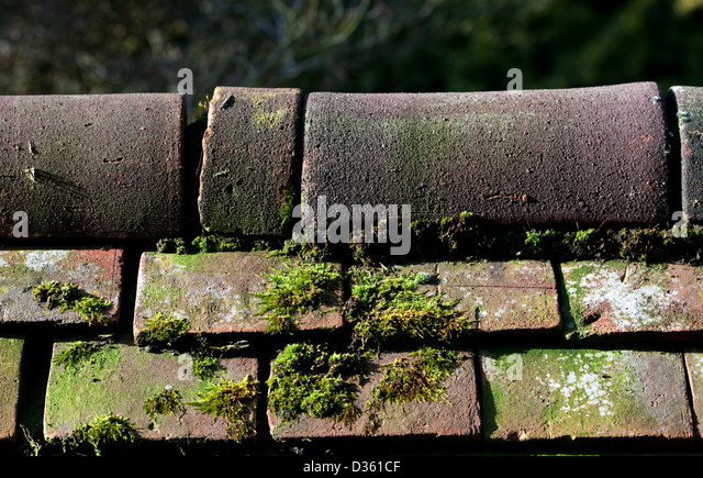 how to kill moss on roof