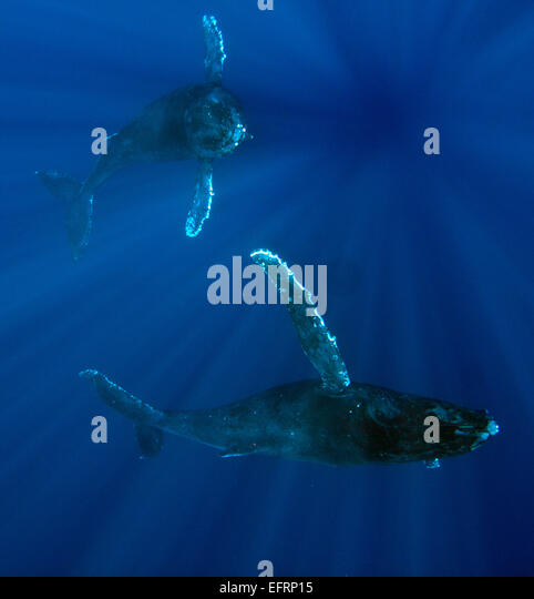 Baleen Whale Teeth Stock Photos Amp Baleen Whale Teeth Stock