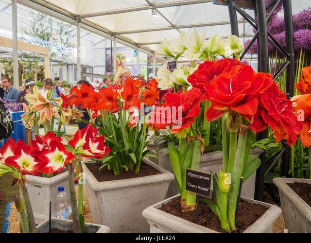 rhs chelsea flower show 2017 stock photos rhs chelsea. Black Bedroom Furniture Sets. Home Design Ideas