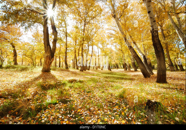 awesome bright autumn scenery - photo #35