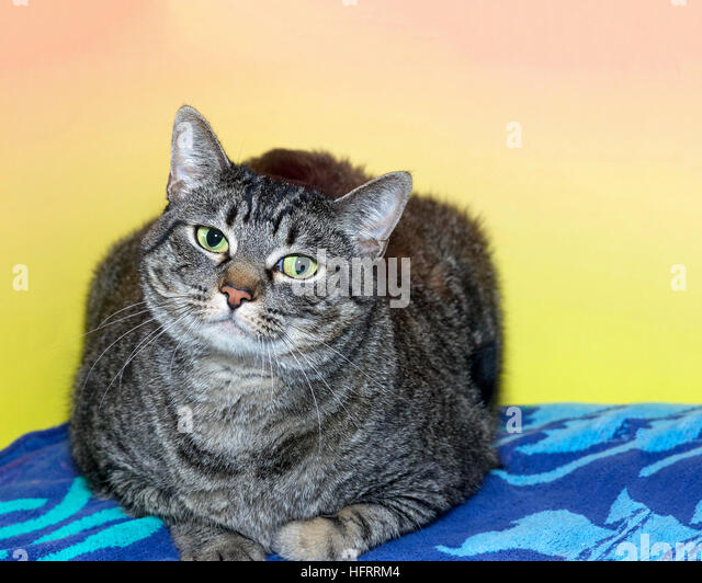 Gray Cat With White Paws With Head Tilted