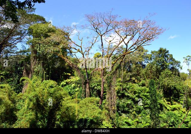 Rainforest On The Big Island: Hawaii Big Island Akaka Falls Stock Photos & Hawaii Big