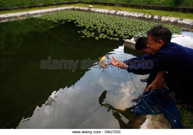 Tilapia farm stock photos tilapia farm stock images alamy for Raising tilapia in a pool